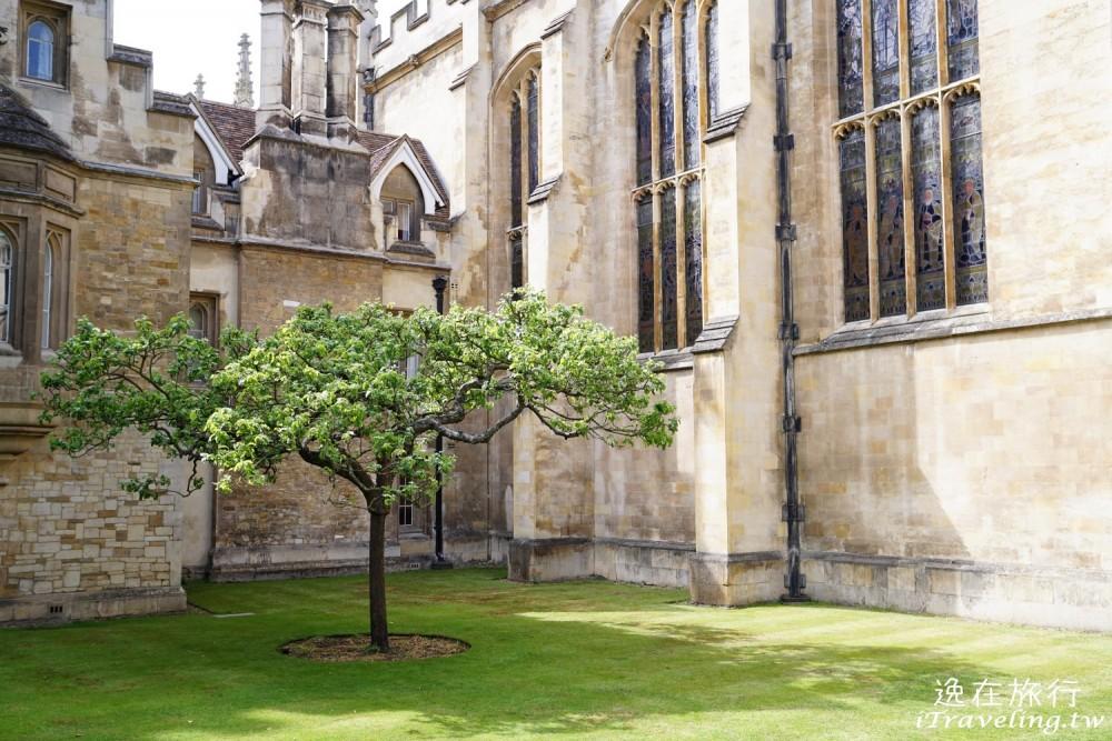 劍橋, Cambridge, 三一學院, Trinity College, 牛頓蘋果樹